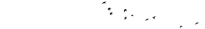 Birds Flying Text Divider