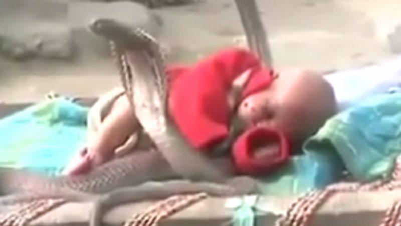 baby and cobra