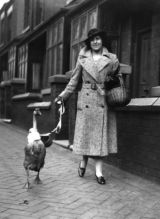 Pet Goose  (Photo by Fox Photos/Getty Images)
